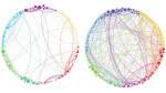 Cervello sottoposto a droghe per spiegare come nasce la coscienza