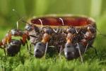Eliminare le formiche senza uso di prodotti chimici, ecco come fare