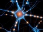 Creato il primo neurone artificiale, svolta nella cura delle malattie del cervello