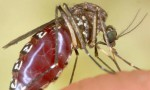 Caldo e zanzare: binomio perfetto in questo mese di Settembre