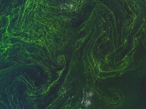 Un gigantesco vortice di alghe fotografato dallo spazio