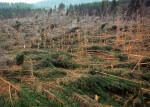 Ambiente: il mondo non è a rischio disboscamento
