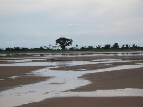 Clima: arriva El Niño, a rischio il caffè africano