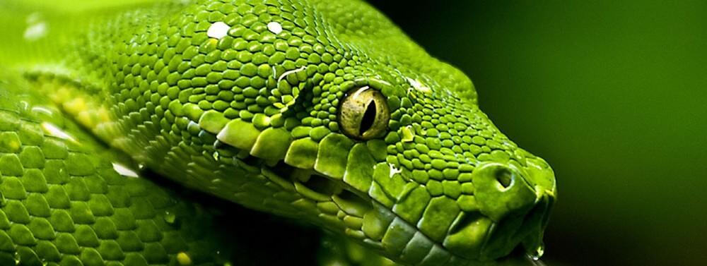 L appello di medici senza frontiere finir l antidoto al for Veleno per serpenti