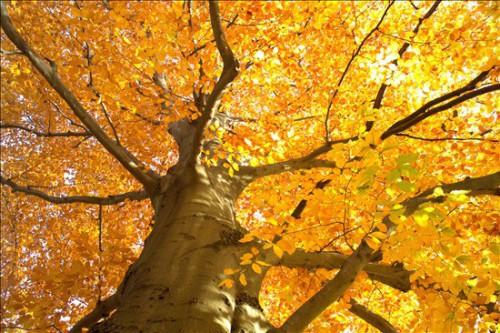 Perché in autunno le foglie degli alberi ingialliscono e cadono?