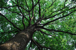 21 Novembre 2015: giornata nazionale degli alberi