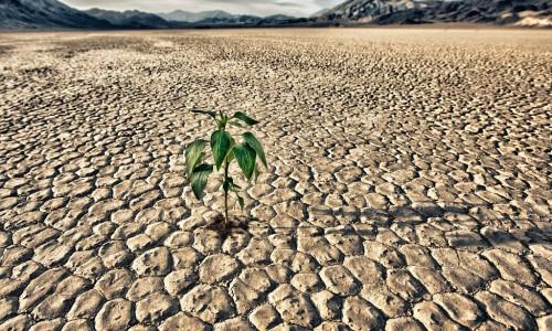 Contro la siccità arriva un'invenzione dalla Russia: l'acqua solida