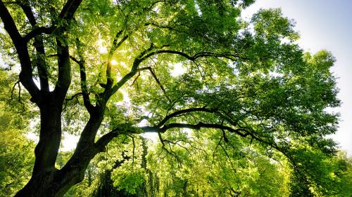 Festa Nazionale dell'Albero 2015, l'Italia festeggia l'importanza delle sue foreste