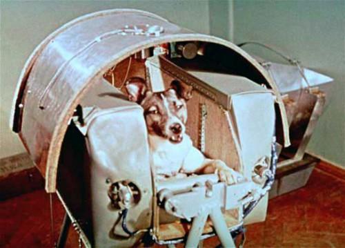 Laika: la cagnolina che andò nello Spazio