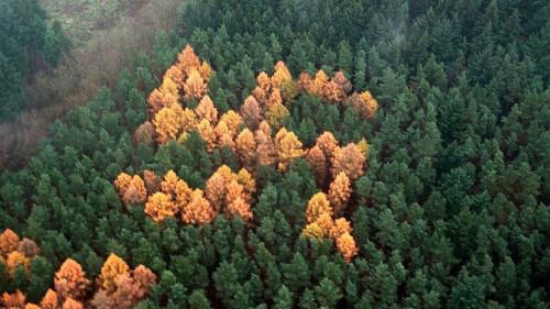 Germania, il mistero della svastica disegnata tra gli alberi