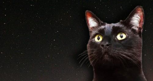 Gatto Nero Day, la ricorrenza contro pregiudizio e superstizioni