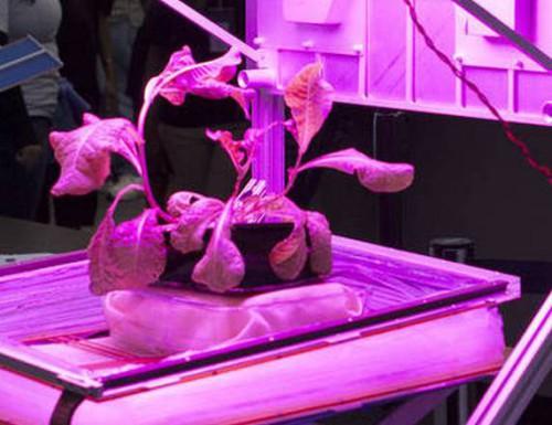 Sono stati piantati i primi fiori nello Spazio: presto sbocceranno splendide zinnie