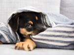 Capodanno: è davvero utile il bendaggio per i cani?