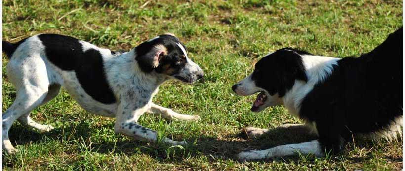 I cani sono empatici e copiano chi sta accanto a loro per condividerne i sentimenti