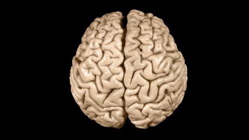 Cervello unisex: nessuna differenza tra uomini e donne