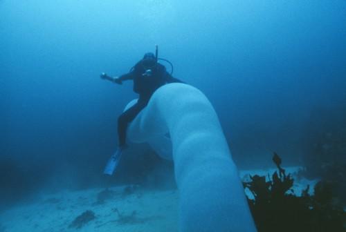 Tasmania: nel fondo dell'Oceano si aggira un mostro marino gigantesco