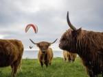 Fao: l'allevamento porterà all'estinzione di molte specie animali