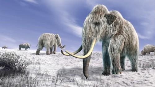 Studio rivela nuove ipotesi sull'estinzione dei Mammut