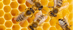Droni come le api, la nuova frontiera della tecnologia