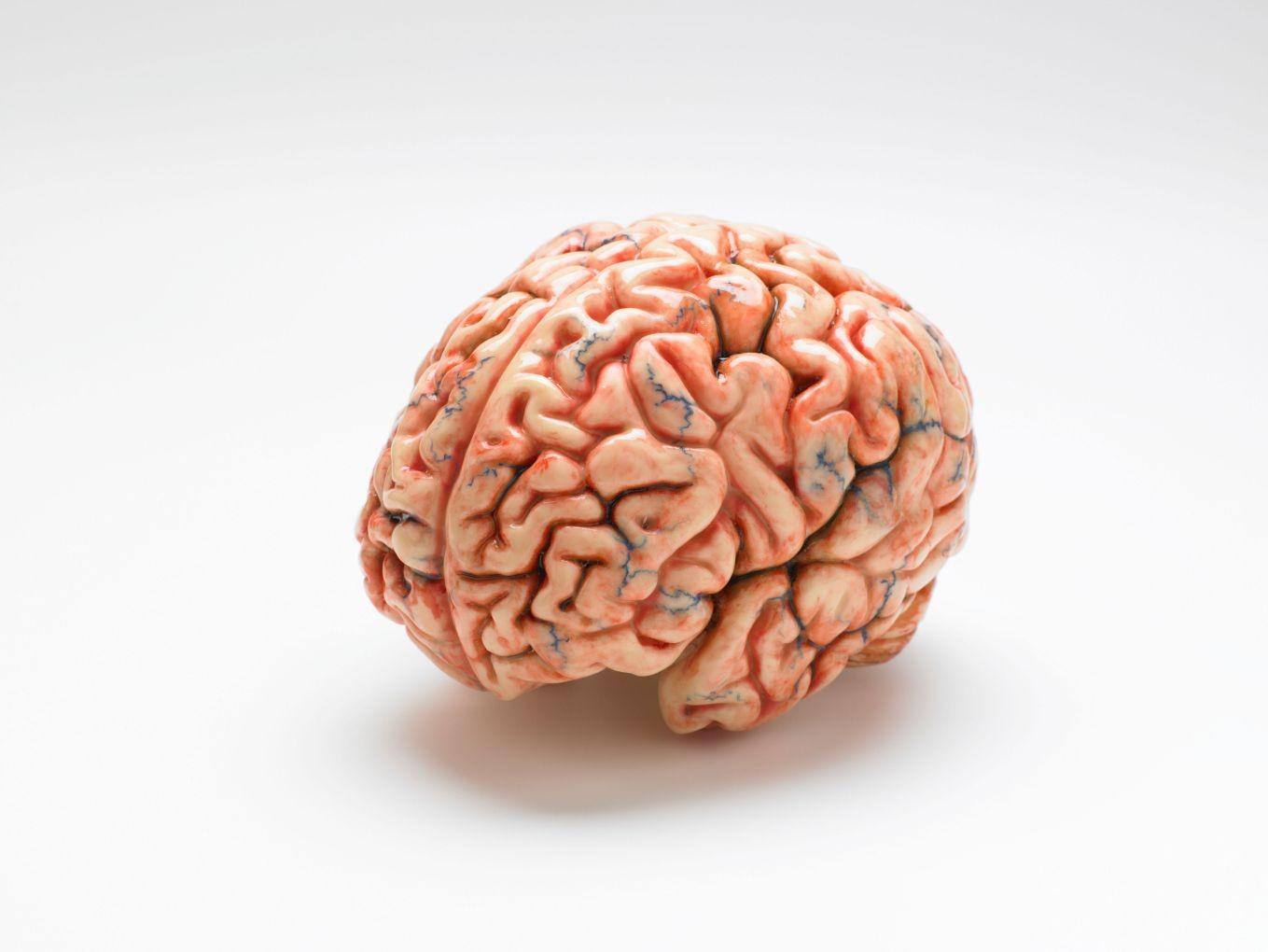 Cervello: può contenere più informazioni di quanto si pensasse