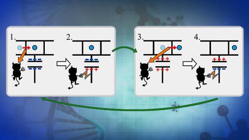 Tecnologia, ricreato in laboratorio il Diavoletto di Maxwell