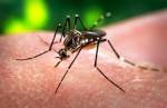Virus Zika, ecco tutti i rischi per l'Europa