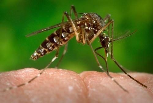 Virus Zika, in Ecuador sconsigliate le gravidanze