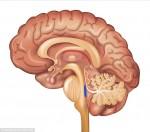 Alzheimer, individuato il punto esatto nel cervello dove ha inizio la malattia
