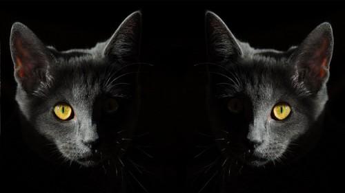 La sindrome di Capgras può estendersi anche agli animali