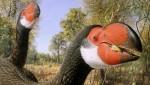 Uccello preistorico scomparso per le uova al tegamino, la scoperta