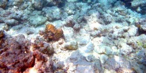 Coralli bianchi: l'allarme degli esperti sull'inquinamento
