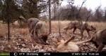 Chernobyl: dopo trentanni gli animali popolano la città