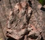 Spagna: scoperta un'impronta di oltre 230 milioni di anni fa