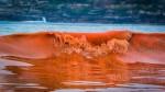 Marea rossa in Cile: migliaia di pesci morti in spiaggia