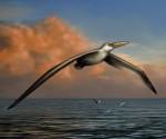 Paleontologia: in Antartide i resti dell'uccello marino più grande mai esistito