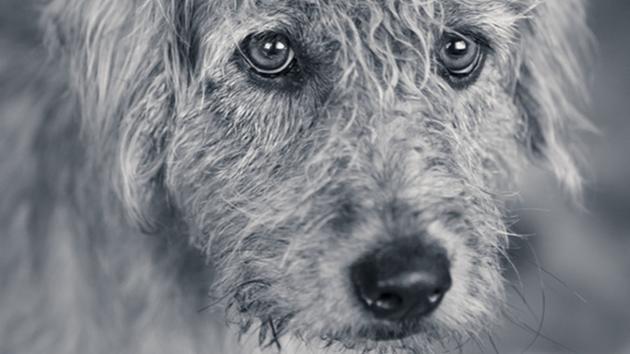 Abbandono cani: la bufala su Facebook del numero di emergenza