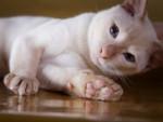 Gatti, una ricerca svela i segreti del loro comportamento