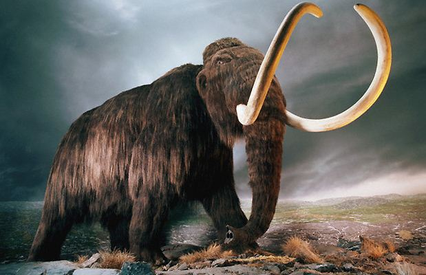 Riportare in vita i mammut: il progetto 'Jurassic Park'