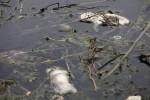 Cina: sostanze cancerogene nell'acqua di 44 città, è allarme