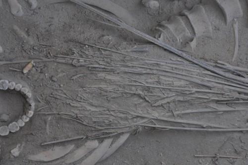 Cina: corpo ricoperto di cannabis in un'antica tomba, la scoperta