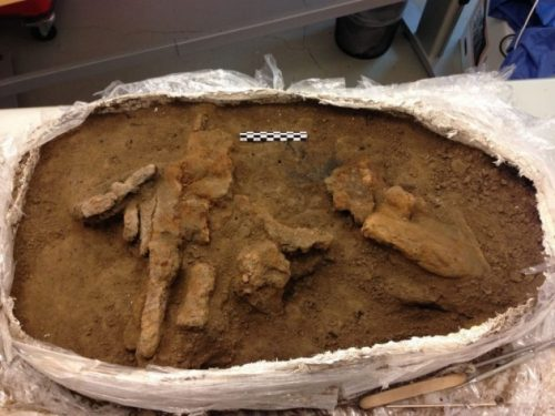 Archeologia: riaperta cassa degli attrezzi vichinga