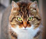 Chi ama i gatti è più intelligente rispetto a chi preferisce i cani?