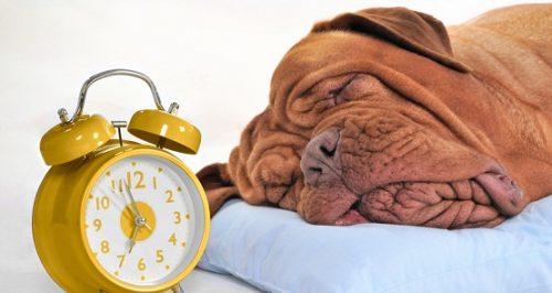 Dormire a faccia in giù provoca le rughe? La risposta degli esperti