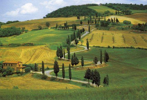 Allergie: chi cresce in campagna è più protetto, la ricerca svizzera