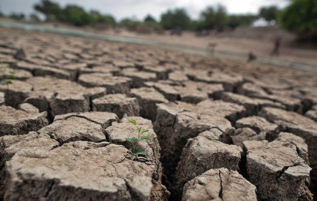 Carestia nel Terzo Mondo: è la peggiore dal 1945