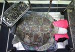 Quasi mille monetine estratte dallo stomaco di una tartaruga