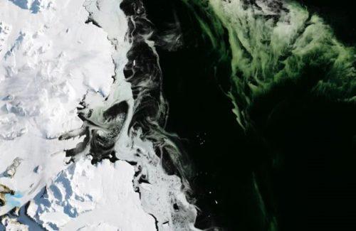 Ambiente: l'Artico sta diventando verde, l'allarme