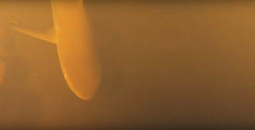 Squali vivono in un vulcano: l'incredibile scoperta nel Pacifico