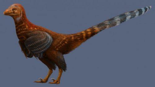 Dinosauro con le piume di uccello scoperto in Cina