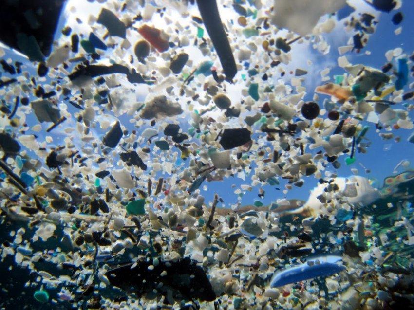 Oceani: i batteri marini stanno ripulendo l'acqua dalla plastica